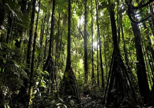 درختانی که راه می روند! + تصاویر