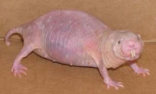 ترسناکترین حیواناتی که تا کنون ندیدهاید + تصاویر