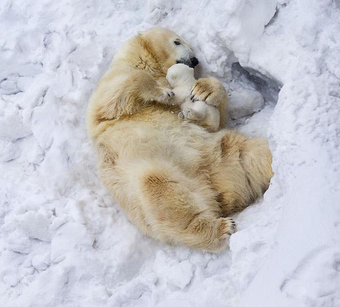 تصاویری زیبا از دنیای احساسات حیوانات !