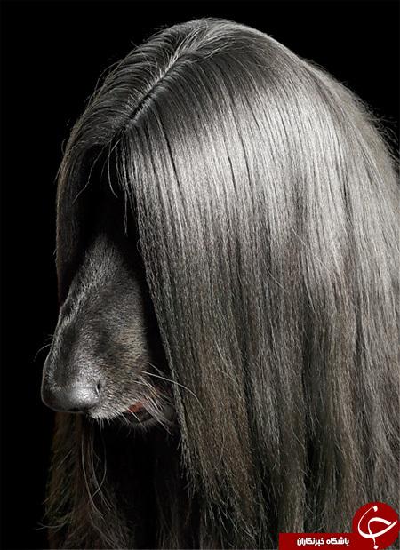 نگاهی به عجیب ترین سگهای دنیا+تصاویر////عکس ها چک شود/////