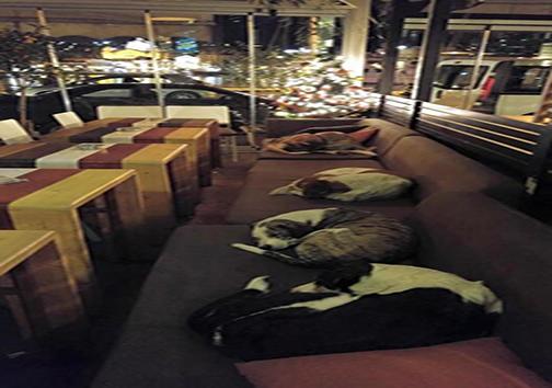 کافهای که شبها به سگهای خیابانی خدماترسانی میکند + تصاویر