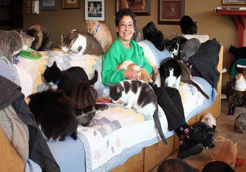 خانمی که 1100 گربه زندگی میکند + تصاویر