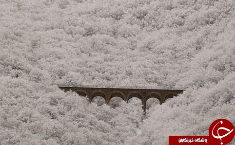 بزرگترین پل ایران سفید پوش شد+تصاویر