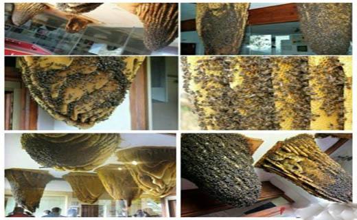 موزه زنبورها+عکس