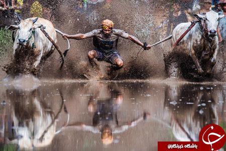 گشتی در تصاویر خبری سه شنبه 13 بهمن/ از مسابقات گاوسواری تا اقدامات بهداشتی علیه ویروس زیکا