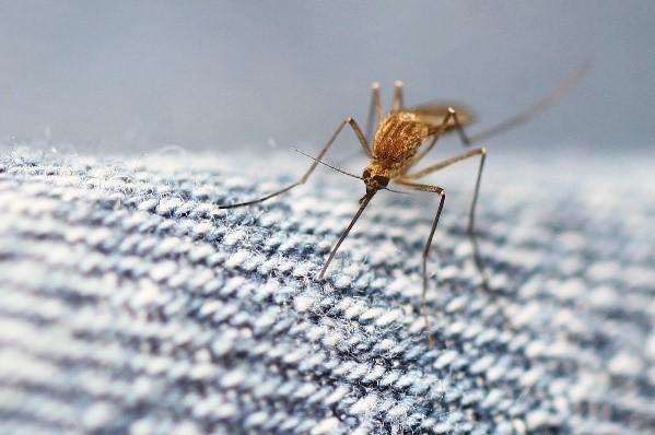 ویروس های خطرناک تر از زیکا را بشناسید+ تصاویر