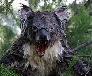 ترسناکترین حیواناتی که تا کنون ندیدهاید +تصاویر