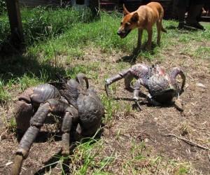 ترسناکترین حیواناتی که تاکنون ندیدهاید +تصاویر