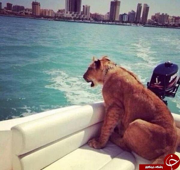حیوانات خانگی کاخ نشینان همسایه +تصاویر