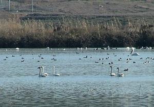تالاب ها و اهمیت آن در نظم طبیعت استان