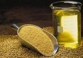 باشگاه خبرنگاران - خوداتکایی 70 درصدی تولید دانه های روغنی نیازمند برنامه 10 ساله
