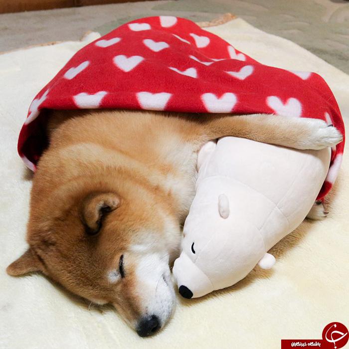 پرطرفدارترین سگ در اینستاگرام + تصاویر