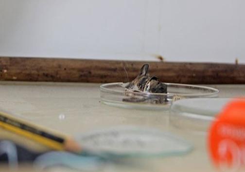گیر افتادن موش در تله 155 ساله +عکس