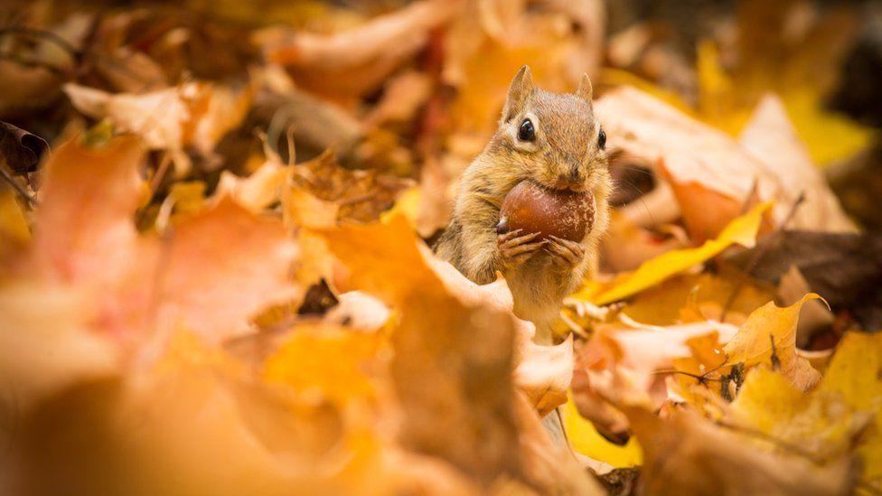 تصاویر دیدنی حیوانات در جنگل نیوانگلند