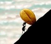 باشگاه خبرنگاران - گفتگوی جالب حضرت سلیمان(ع) با مورچهای در اعماق دریا