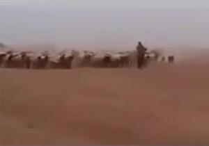 نیروهای عربستان وارد خاک سوریه شدند! + فیلم
