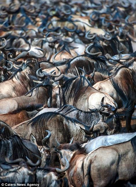 آیا میتوانید دو حیوان دیگر را در این عکس دسته جمعی پیدا کنید؟