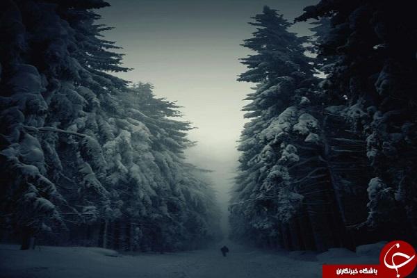 ١۵ جنگل مرموز و شگفت انگیز دنیا + تصاویر