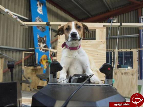 سگ هایی که خلبان شدند + تصاویر