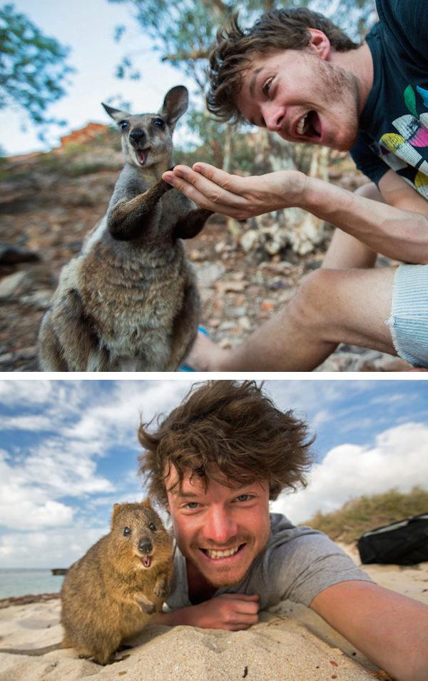 عکس سلفی به حیوانات رسید