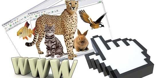 حراج حیات وحش در اینترنت!/گونههای نایاب جانوری با یک کلیک خرید و فروش میشوند
