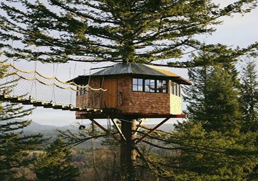 ساخت یک خانه درختی به قیمت از دست دادن شغل پر درآمد + تصاویر