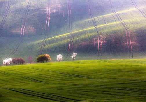 مزارع کشاورزی با نمایی همچون امواج دریا + تصاویر