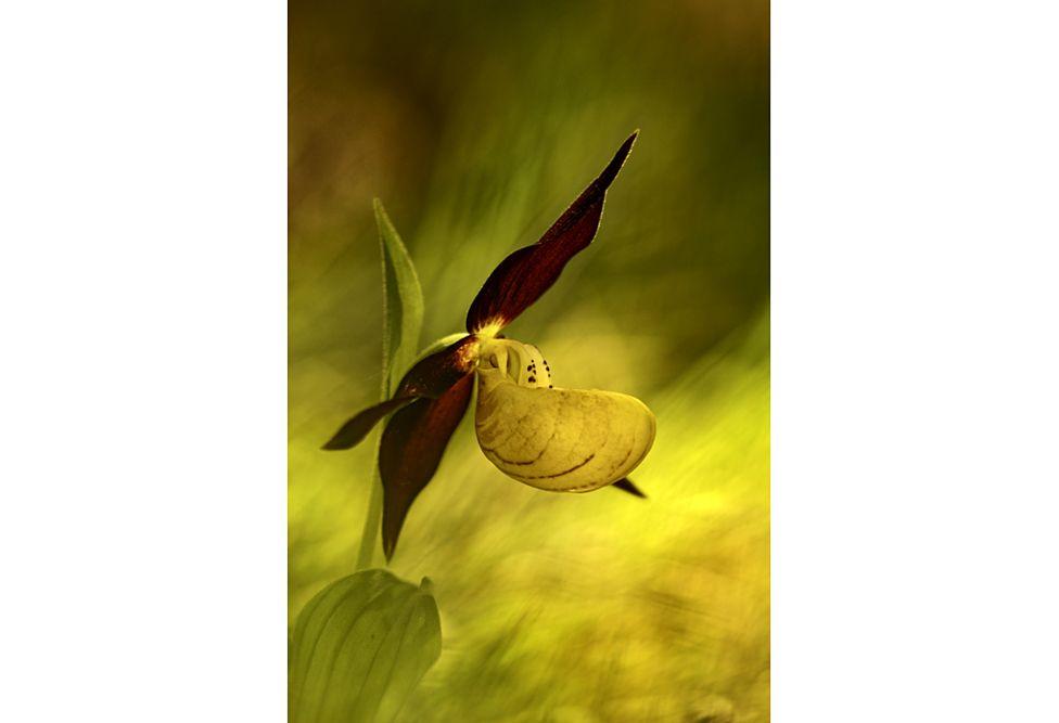 تصاویر حیرتانگیزه و برگزیده از باغ گلها