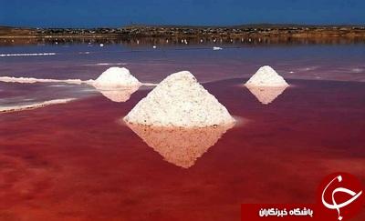 شورترین دریاچه جهان / دریاچه  آفتاب پرستی که رنگ عوض میکند/ آفتاب پرست دریایی +تصاویر
