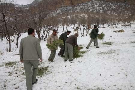دانه پاشی برای پرندگان در صورت تداوم برف و سرما
