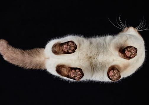 گربه ها را از پایین دیده بودید؟! +عکس