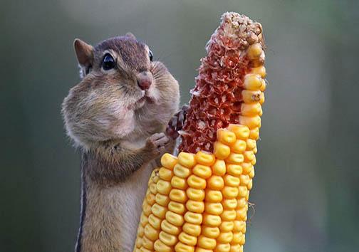 تصاویری دیدنی از حیوانات در حین خوردن غذا + تصاویر