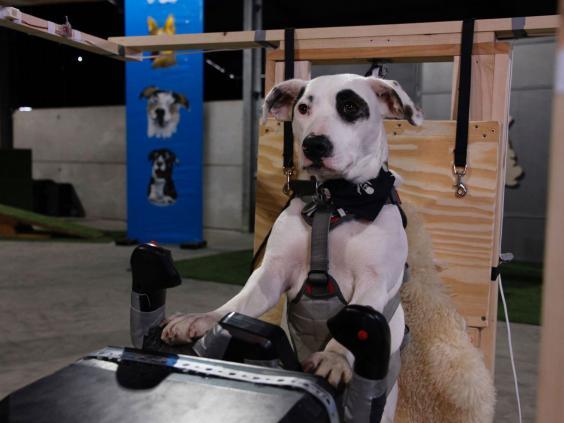 سگهایی که به تنهایی یک هواپیما را کنترل میکنند+تصاویر