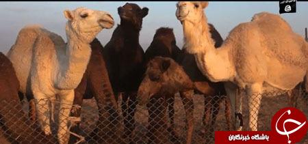 داعش در صدقه دادن دلار را جایگزین دینار کرد+ تصاویر