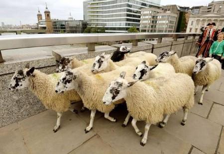 مضحکترین قوانین کتاب قانون بریتانیا+تصاویر