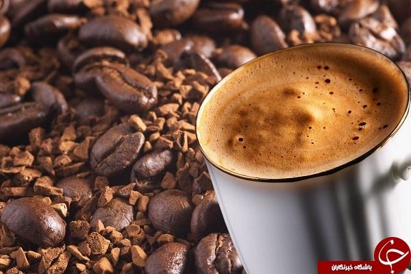 گران ترین قهوه جهان از مدفوع این حیوان بدست می آید! + تصویر
