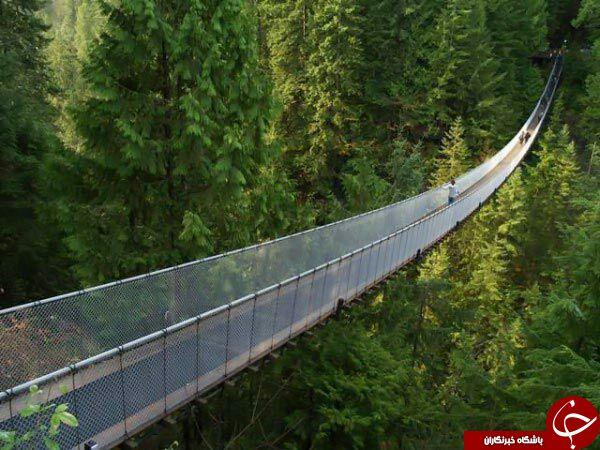 عبور از این پل ها ، دل شیر می خواهد +تصاویر