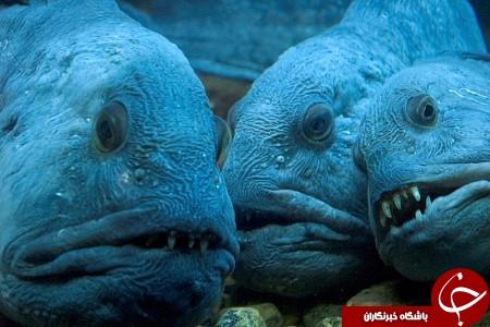 در حال کار// ترسناکترین قاتلان ناشناخته دریا + عکس