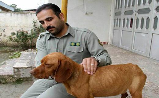 عامل شکنجه بیرحمانه یک سگ در گلستان دستگیر شد