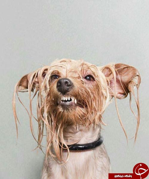 عکس های پرسنلی سگ های خیس + تصاویر