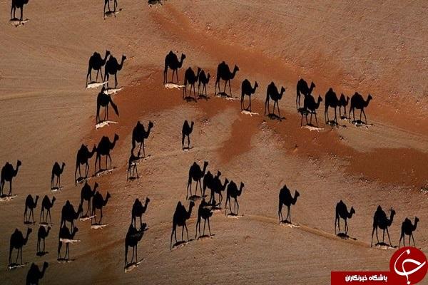 عکس های هوایی از ریودوژانیرو برزیل + تصاویر