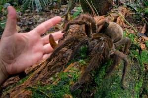 4260410 515 نادرترین عنکبوتهای ترسناک جهان+تصاویر