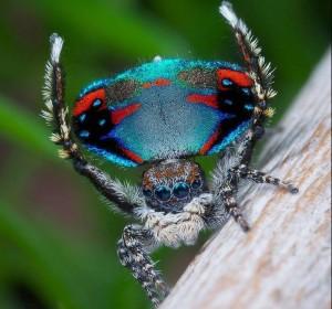 4260412 684 نادرترین عنکبوتهای ترسناک جهان+تصاویر