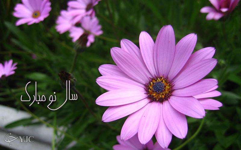 4262150 235 پوسترهای جدید عید نوروز ۹۵