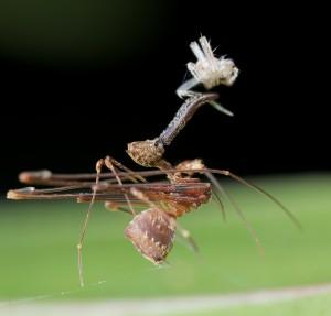 عجیبترین عنکبوتهای جهان