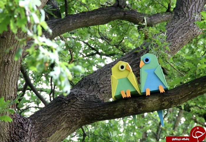 لانه سازی برای حفظ پرندگان+تصاویر