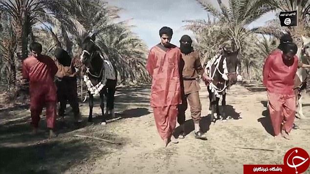 خلاقیت داعش در گردن زنی؛ این بار با اسب! +تصاویر