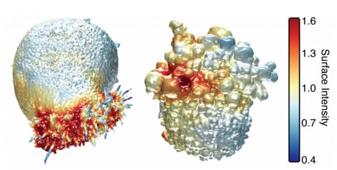 مشاهده سلول سرطانی زنده با میکروسکوپ سه بعدی+ عکس