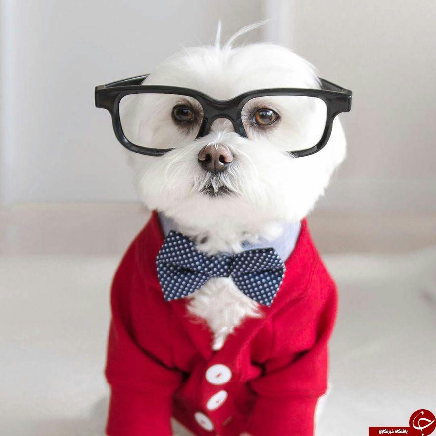 جنتلمن ترین سگ دنیا + تصاویر