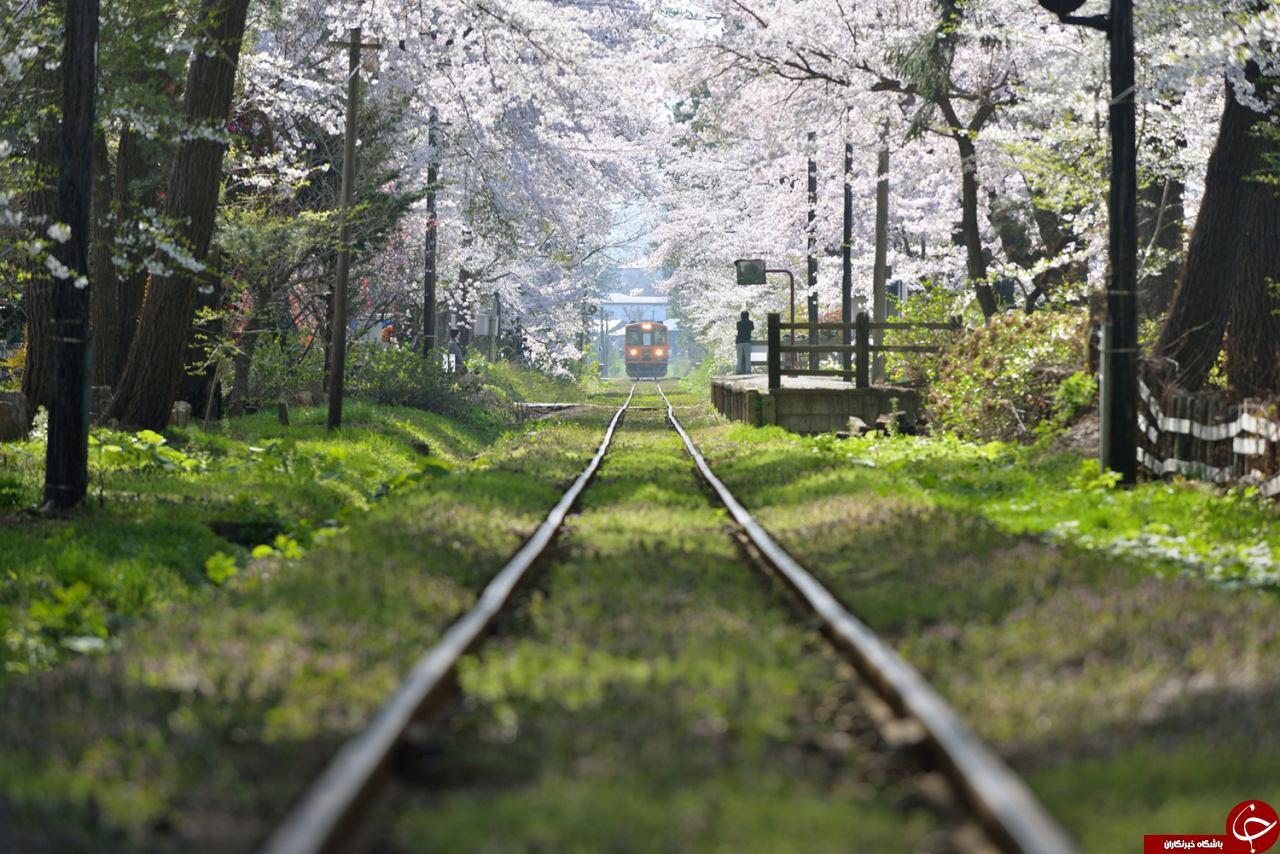 بهشت زیر پوستی در ژاپن+ تصاویر